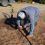 畑の水やり作業