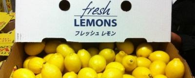 チリ産レモンがやってきました