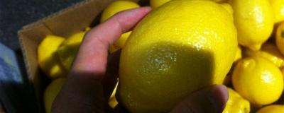 アメリカ産レモン